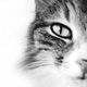 Macska képe